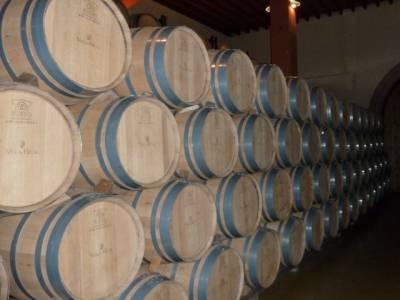 Visita enológica a Peñafiel – Ribera del Duero; senderismo buitrago de lozoya